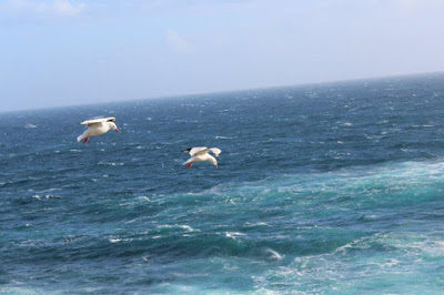 Philip Island, Australia