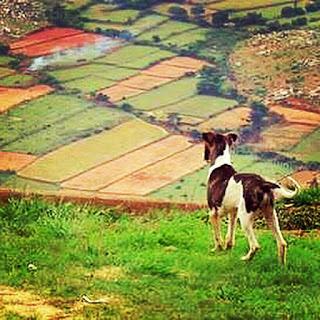 Nandi_Hills_Bangalore
