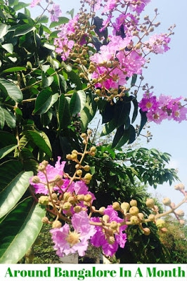 Visit Bangalore Summer