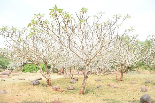 One Day In Pondicherry